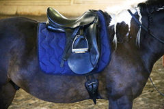 Leather saddle for equestrian sport on a back of a horse Royalty Free Stock Images