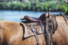 Leather saddle on the horse`s back Stock Photos