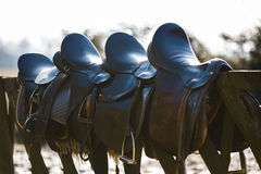 Leather saddle horse Stock Photos