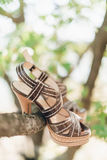 Leather sandals on branch. Brown high heel leather sandals hanging on branch Royalty Free Stock Photography