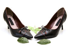 Leather shoes. And green leafs Stock Image