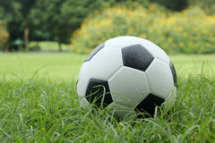 Leather Soccer ball Stock Image