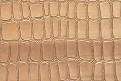 Leather texture. Crocodile leather texture to serve as background Royalty Free Stock Images