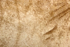 Leather texture. Closeup of brown leather texture stock photos