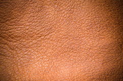 Leather texture Stock Photos