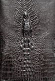 Leather texture background. Royalty Free Stock Photos