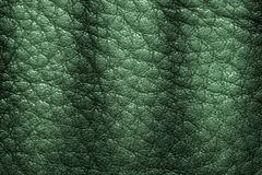 Leather texture or leather background for industry export. fashion business. furniture design and interior decoration idea concept Royalty Free Stock Photography