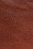 Leather texture Stock Images