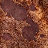 Leather texture closeup Stock Photography