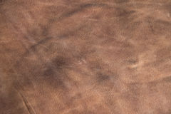 Leather Texture. Natural leather abstract texture. Close up Royalty Free Stock Images