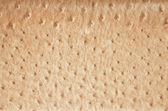 Leather texture ostrich spots Stock Photos
