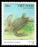 Leatherback Sea Turtle stock image