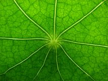 Leave. Bright green leave.Abstract image Royalty Free Stock Photos