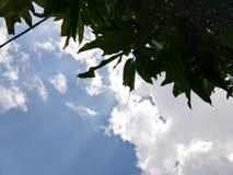 leave cloud sun impact Royalty Free Stock Image