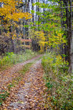 Leave covered road in a pretty fall woods. A scenic road covered with colorful fall leaves leads you into a beautiful autumn woods stock photography