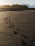 Leave Only Footprints. Only footprints mark the passage of man across the beach Stock Photography