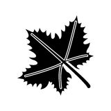Leave grape wine symbol pictogram. Vector illustration eps 10 Royalty Free Stock Photos