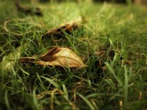 Leave on grass. At india in my home garden Stock Photography