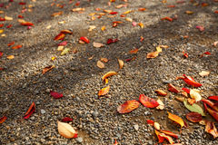 Leave on gravel Stock Photos