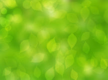 Leave green autumn nature blur bokeh background Stock Image