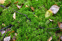Leave on ground covered by moss Stock Images