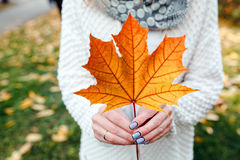Leave in hands Royalty Free Stock Photography
