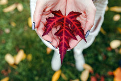 Leave in hands Royalty Free Stock Photos