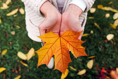 Leave in hands Royalty Free Stock Images