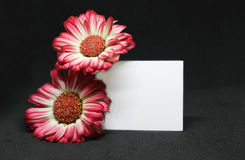 Leave a message. Gerbera flowers with blank paper for leaving a message over black background Royalty Free Stock Photo