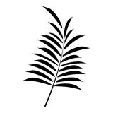 Leave palm tropical flora pictogram. Vector illustration eps 10 Royalty Free Stock Image