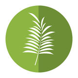 Leave palm tropical flora shadow. Vector illustration eps 10 Royalty Free Stock Photography