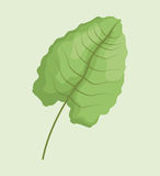 Leave palm tropical natural. Illustration eps 10 Stock Photo