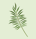 Leave palm tropical natural. Illustration eps 10 Royalty Free Stock Photo