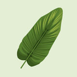 Leave palm tropical natural. Illustration eps 10 Stock Photos