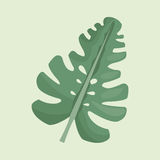 Leave palm tropical natural. Illustration eps 10 Royalty Free Stock Image