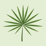 Leave palm tropical natural. Illustration eps 10 Stock Image