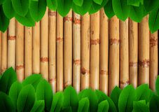 Leave of plant  on bamboo background Stock Photography