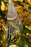 Leave Rake. The image shows a leave rake and foliage royalty free stock image