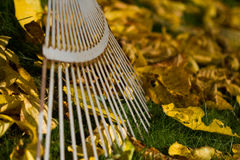 Leave Rake. The image shows a leave rake and foliage royalty free stock photography