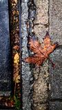 A Leave on road. Falling wallpaper yellow brown floor road only you royalty free stock photography