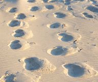 Leave traces - many deep tracks in sand Stock Photo