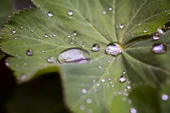 Leave and water drops details background, selective focus Royalty Free Stock Photo
