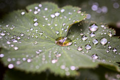 Leave and water drops details background, selective focus Stock Photo