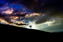 Leaved Tree Under Purple Blue and White Clouds during Daytime Stock Images