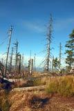 Leaveless granar på slingan i bergen Arkivbilder