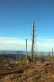Leaveless granar på slingan i bergen Fotografering för Bildbyråer