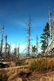 Leaveless si attilla sulla traccia nelle montagne fotografia stock libera da diritti