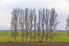 Leaveless trees in winter inrural area Royalty Free Stock Photos