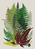 Leaver ferns. Composition. Vector botanical vintage illustration. Colorful Stock Images
