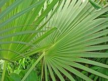leavesöverlappning gömma i handflatan tropiskt Arkivbild